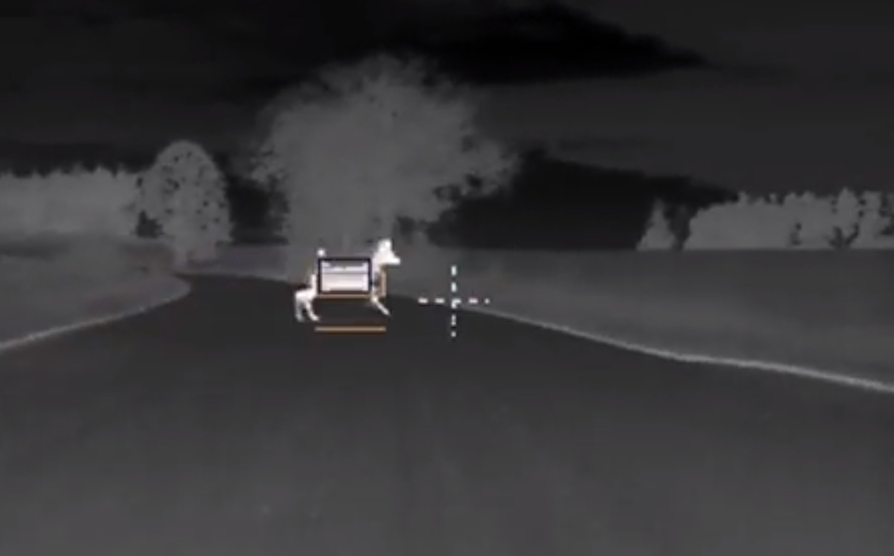 Bmw Introduces New Night Vision Animal Detection System